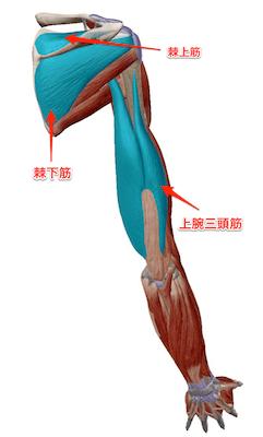 肩関節窩後下方