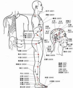 11、足の少陽胆経 | 整体・鍼灸...